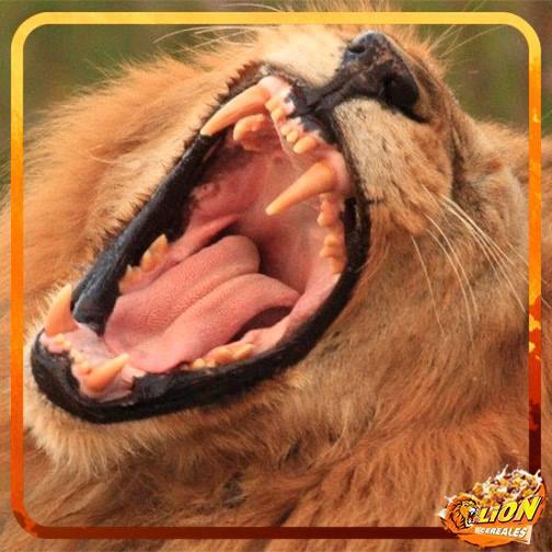 La Química Salvaje de los Cereales Lion de Nestlé